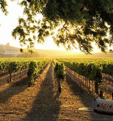 Foxen Canyon Wine Trail at California